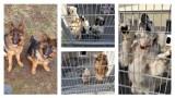 Znęcała się nad 37. psami! Zapadł prawomocny wyrok w sprawie pseudohodowli pod Świeciem