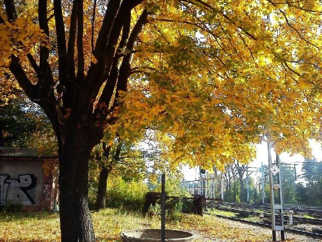 Jesień widziana oczami Internauty