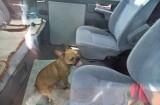Straż Miejska we Władysławowie uratowała psa z rozgrzanego auta. Słony mandat dla właściciela czworonoga | NADMORSKA KRONIKA POLICYJNA