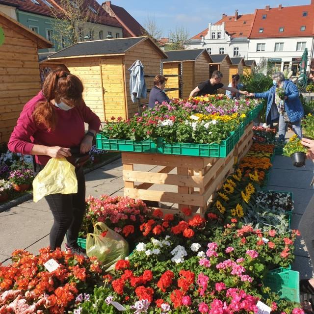 Kwiatobazar znów zagości na Rynku w Wodzisławiu Śl.