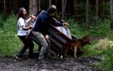 Uratowany z wypadku drogowego wilk Wolfik wrócił na wolność. Zdrowie odzyskał w ośrodku w Przemyślu [ZDJĘCIA]