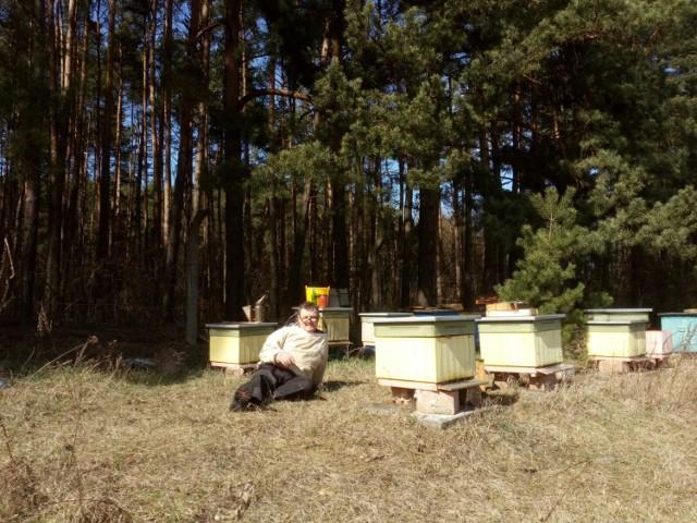 Po zimie każdy pszczelarz sprawdza swoją pasiekę, by dowiedzieć się w jakiej kondycji przezimowały jego pszczoły