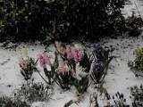 Zbąszyń: Kwiecień plecień, bo przeplata trochę zimy, trochę lata ... Zdjęcia i wideo - 6 kwietnia 2021