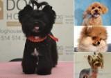 Najpiękniejsze psie fryzury z krakowskich salonów. Zobaczcie te cuda! 29.04
