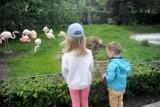 Z maseczką wśród zwierząt. Pierwsi odwiedzający zaglądają już do małp i flamingów w krakowskim zoo. Są małe słodziaki!
