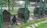 Schronisko dla zwierząt w Żorach: Powstaje dokumentacja projektowa inwestycji