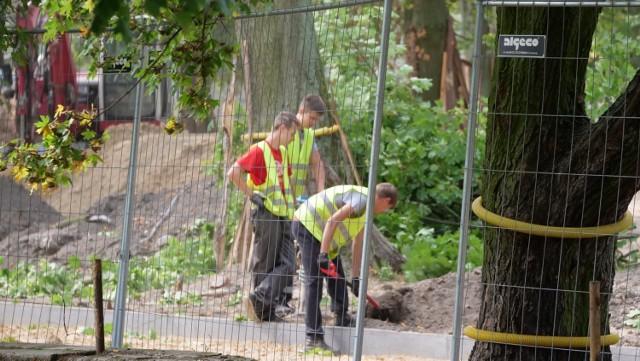 Trwa rewitalizacja Parku Trzech Kultur w Gnieźnie. Koszt odnowienia parku to ok. 3 miliony złotych.  Park Trzech Kultur - trwa rewitalizacja: