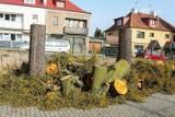Kiedy po wycince drzew na ul. Reymonta w Szczecinie pojawią się nowe? Co im dolegało?