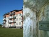 Lubliniec: w prawie nowych blokach przy ul. Wilniewczyca przemakają sufit i ściany na najwyższych piętrach. Gdzie leży problem? ZDJĘCIA