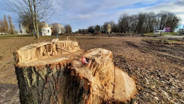 W zeszłym roku wycięto około 2 tys. drzew. W tym roku będzie to ponad 1 tys. sztuk.
