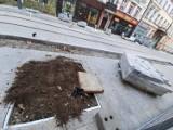 Czy korzenie drzew będą miały przestrzeń? Drzewa się nie przyjmą?