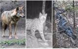 Co się czai w lasach na Dolnym Śląsku? Jadowite pająki, latające kleszcze, wilki, żmije... Zobaczcie, zanim wybierzecie się na grzyby