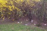 Ogródek jordanowski w Kaliszu bez toalet. Miasto o nich zapomniało?