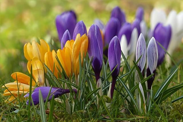 Kiedy przyjdzie upragniona wiosna i kiedy będzie ciepło? Sprawdziliśmy prognozy długoterminowe