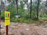 Tutaj w Kujawsko-Pomorskiem nie możesz zbierać grzybów. Zakaz wstępu do lasów przedłużony [przyczyny, daty]