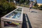 Powstała kolejna plenerowa biblioteka w Bydgoszczy. To gratka dla miłośników książek [zdjęcia]