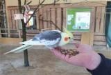 Blisko Żagania powstała papugarnia - azyl dla porzuconych ptaków. Rusza jeszcze przed majówką w Parku Krasnala!