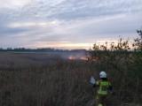 Gmina Cedry Wielkie. Strażacy gaszą pożary traw, które ktoś wznieca |ZDJĘCIA