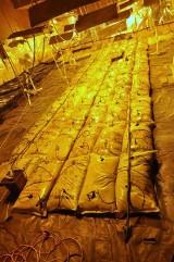 Biała Podlaska. Mundurowi zlikwidowali dwie profesjonalne plantacje konopi
