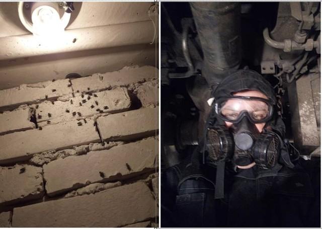 Przeraźliwy fetor śmierci towarzyszy mieszkańcom Fortecznej w Wałbrzychu. Mają dość much i larw, które pojawiły się w budynku po śmierci sąsiada