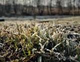 Ostrzeżenie pogodowe dla niektórych powiatów w woj. lubelskim. Idą przymrozki!