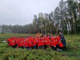 Dzieci z Przedszkola Miś w Szczecinku posadziły prawdziwy Stumilowy Las [zdjęcia]