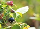 Tych owoców nie zbieraj! Poznaj trujące owoce rosnące w lesie i ogrodzie