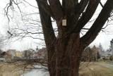 Śródmieście Krosna stało się ptasią dzielnicą. Zamontowano tu sto budek dla ptaków. To projekt obywatelski [ZDJĘCIA]