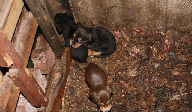Na płotem działki chełmnianina leżało 15 martwych psów. Na jego działce znaleziono kolejne czworonogi