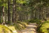 Kolejne szlaki w Karkonoszach otwarte. Sprawdź!