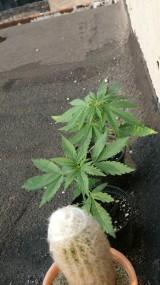 Narkotyki Krotoszyn - Zatrzymani w drodze na Woodstock. Mieli narkotyki przy sobie i w domu. ZDJĘCIA