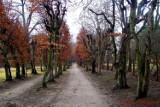 Zbąszyń: Marcowy spacer po zbąszyńskim parku miejskim  Nic się nie zmieniło! [Zdjęcia]