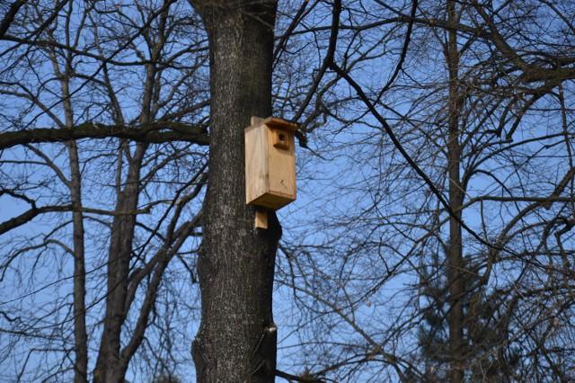 Montaż budek lęgowych dla ptaków to jeden z projektów, jakie do tej pory zrealizowano w ramach budżetu obywatelskiego Bochni
