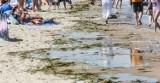 Uwaga! Groźne bakterie w Jeziorze Mucharskim! Nie wchodźcie tu do wody