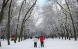 Magiczne trasy spacerowe blisko Warszawy. Zimą wyglądają przepięknie