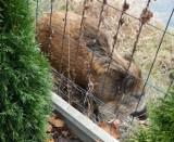 """Kolejne """"polowanie"""" na dzika w centrum Goleniowa. Przerażony wpadł do rzeki"""