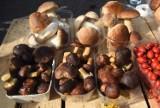 Mapa grzybów. Najlepsze miejsca na zbieranie grzybów? Gdzie wybrać się na grzyby? Gdzie rosną grzyby? Miejsca na rydze i maślaki 27.10.2021