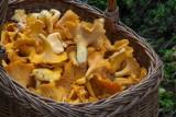 Jakie miejsca lubią grzyby? Gdzie wybrać się na grzyby? Miejsca na rydze i maślaki. Gdzie rosną grzyby? 21.10.2021
