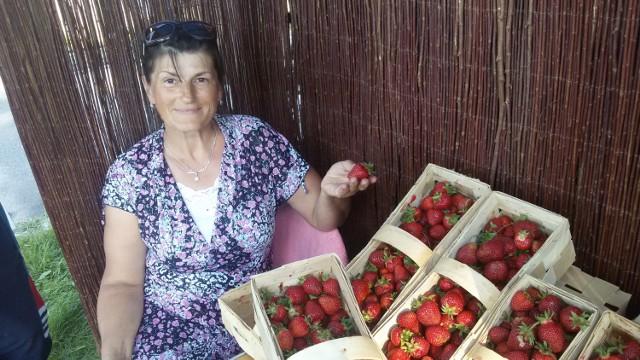 Małgorzata Lubińska hoduje truskawki w gliwickiej Ostropie. Prezentuje odmianę hokent.