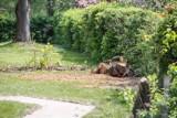 Wycinka drzew przy Towarnickiego w Rzeszowie. Pod halę sportową przy Zespole Szkół nr 1 [ZDJĘCIA INTERNAUTY]
