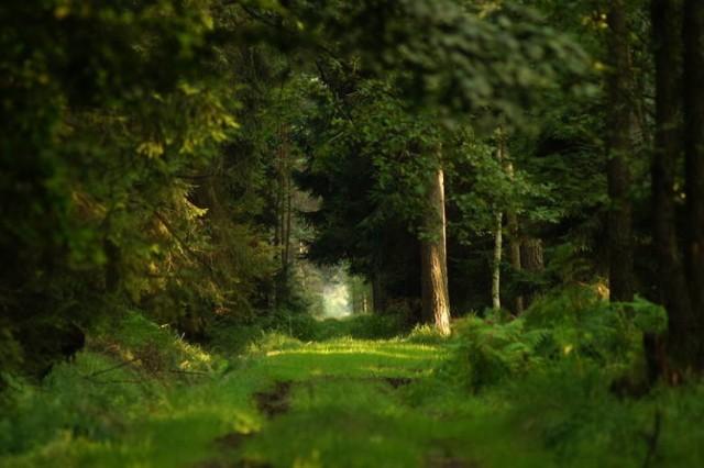 Największy kompleks leśny w Polsce to Bory Dolnośląskie, które mają powierzchnię 165 tys. ha ( czyli 165 000 kwadratów o boku 100 m ).