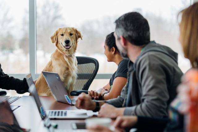 Gdzie można przyprowadzić psa do pracy? Czy czworonogi odnajdują się w przestrzeni biurowej?    Zobacz, jak wygląda praca z psem.