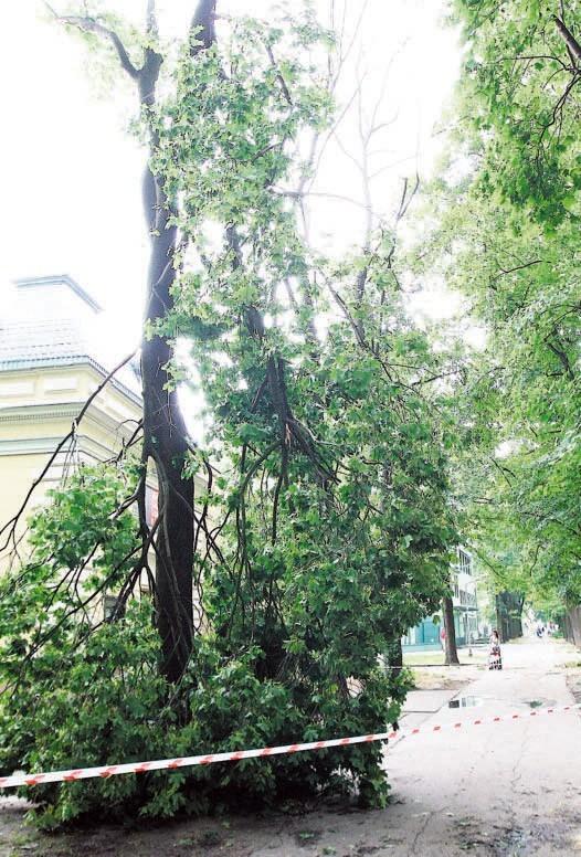 Podczas wichury zupełnie zniszczonych zostało około 200 drzew. Na zdjęciu park Sienkiewicza.