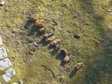 Martwe nietoperze z parku w Żorach zbadane przez weterynarza - czy miały wściekliznę? ZDJĘCIA