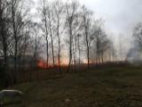 Chrzanów, Libiąż. Pracowity dzień strażaków. Kolejny raz paliły się trawy