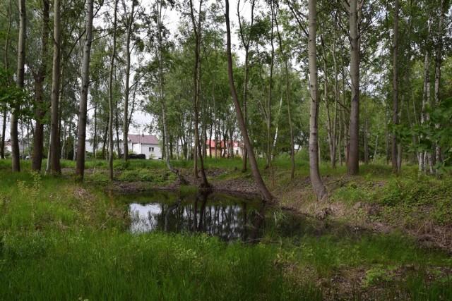 Okolice ul. Zygmunta Starego w Nowej Soli bardzo się zmienią. Będzie tutaj atrakcyjny park. To jedno z pięciu miejsc, które będą nowymi atrakcjami miasta.  Kliknij w zdjęcie i przejdź do galerii.>>>>