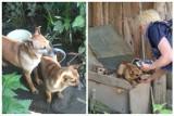 Horror w Korzennej. TOZ z Krynicy uratowało psy hodowane na smalec?! Zwierzęta były przetrzymywane w bardzo złych warunkach [ZDJĘCIA]