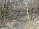 Zaśmiecone tereny Świętochłowic: teren przy ul.Hajduki ma zostać posprzątany